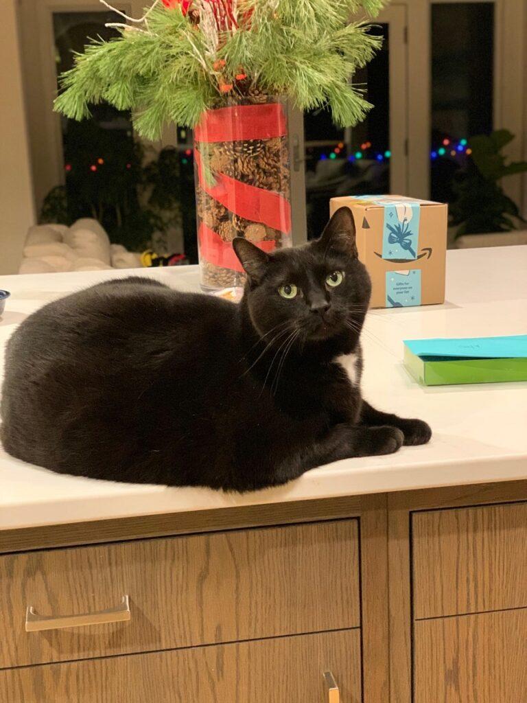 Cat Sitting Rockford MI