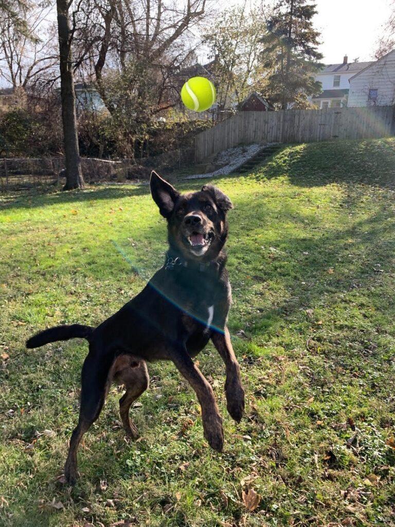 Dog Sitting Rockford MI